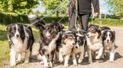 Dog Walking Agreement - How to Guide