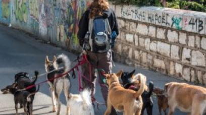 Protect Your Dog Walking Business with a Dog Walking Contract